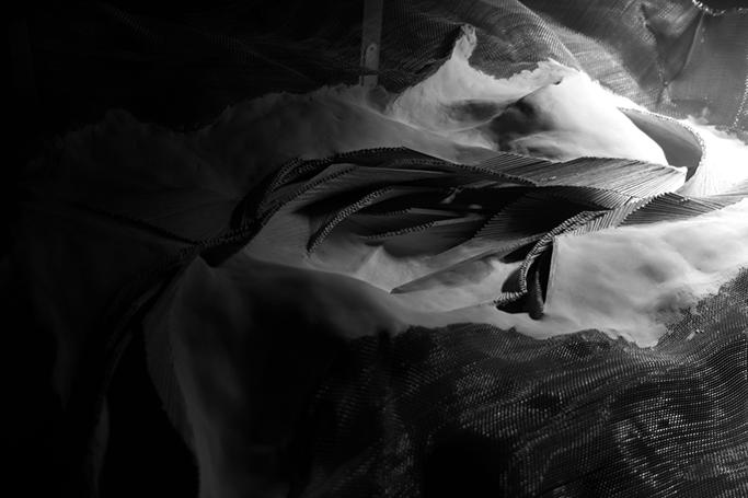 白黒-1段階